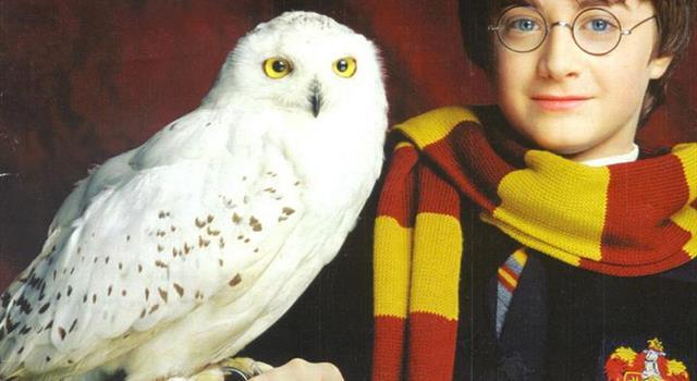 Filmy Pytanie-Ciekawostka: Jak miała na imię sowa Harry'ego Pottera?