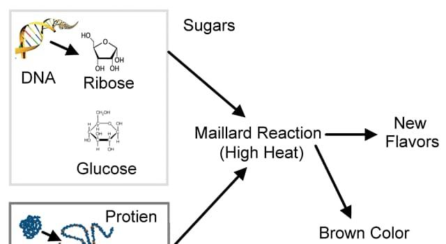 Сiencia Pregunta Trivia: ¿Qué es la reacción Maillard?