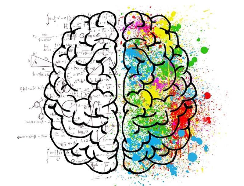 Wissenschaft Wissensfrage: Welche Seite des menschlichen Körpers wird von der linken Gehirnhälfte kontrolliert?