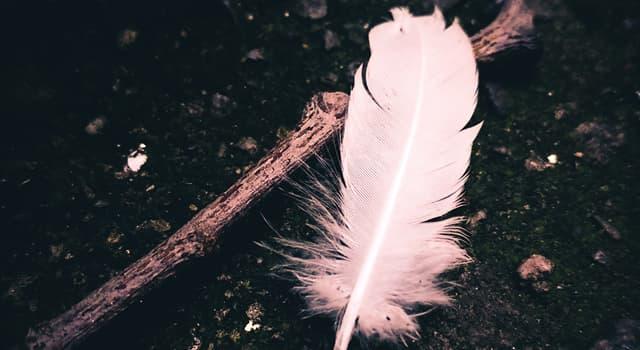 Kultura Pytanie-Ciekawostka: Zgodnie z popularnym przesądem, jakie ptasie pióra nie powinny znajdować się w domu jako dekoracja?