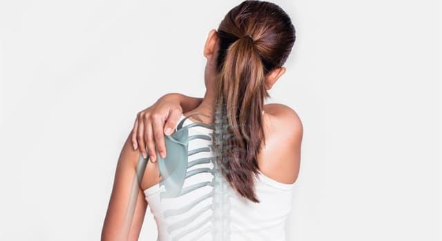 nauka Pytanie-Ciekawostka: Poza odcinkiem szyjnym i piersiowym, które kręgi tworzą razem kręgosłup?