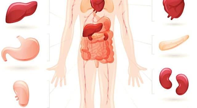 nauka Pytanie-Ciekawostka: Jakiego organu ludzkiego ciała dotyka cholecystitis?