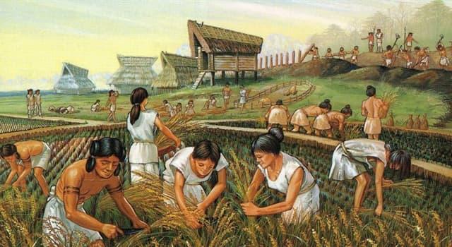 Historia Pregunta Trivia: ¿Con qué otro nombre se conoce al período Neolítico?