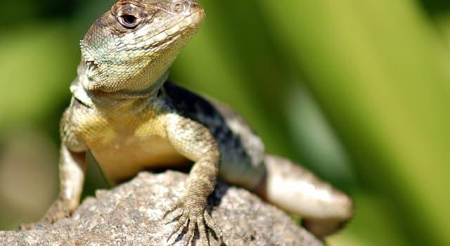 """Сiencia Pregunta Trivia: ¿El nombre de qué animal significa literalmente """"lagarto terrible""""?"""