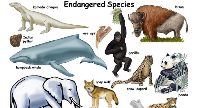 natura Pytanie-Ciekawostka: Jakim gatunkiem ssaka jest zagrożony Nibylis Darwina, zamieszkujący Amerykę Południową?