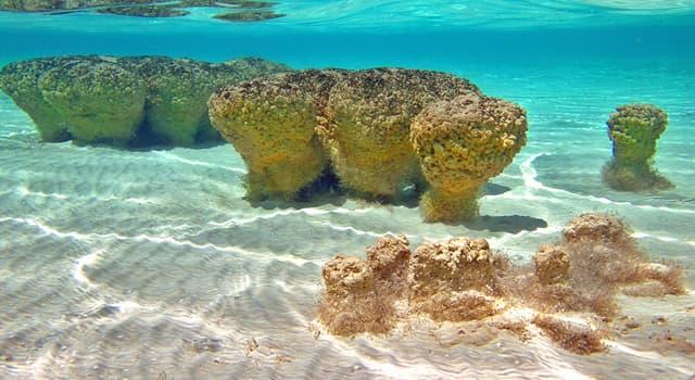 Сiencia Pregunta Trivia: ¿Qué son los estromatolitos?