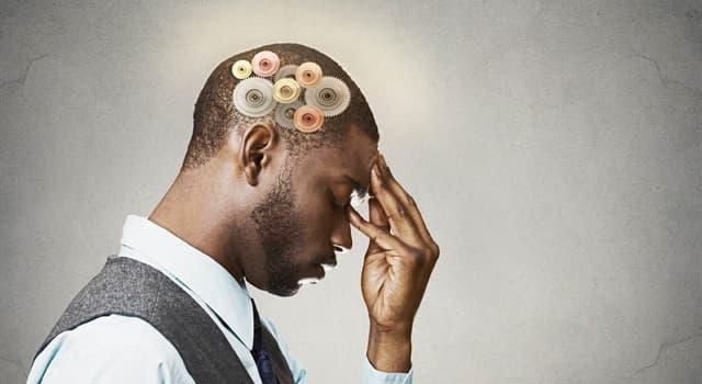 Wissenschaft Wissensfrage: Woraus besteht hauptsächlich das menschliche Gehirn?