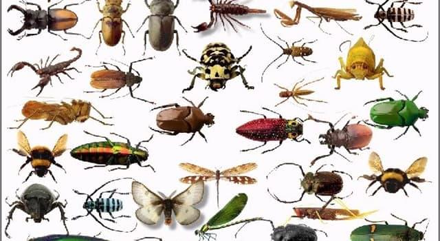 natura Pytanie-Ciekawostka: Jaka jest największa grupa owadów na świecie?