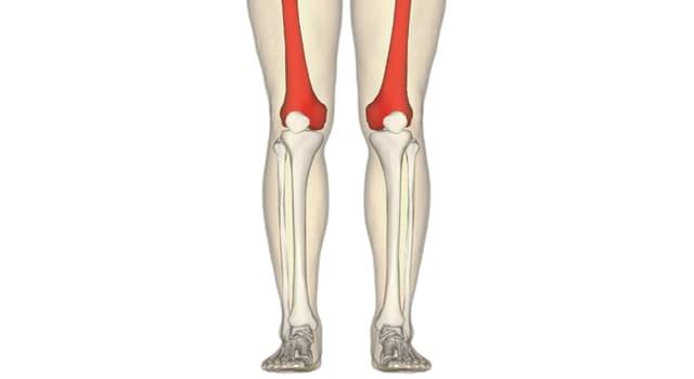 Wissenschaft Wissensfrage: Wie heißt fachsprachlich der Oberschenkelknochen?