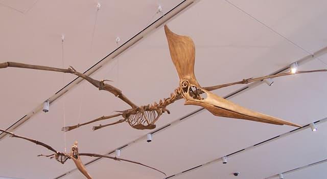 nauka Pytanie-Ciekawostka: Jak nazywa się prehistoryczny latający gad?