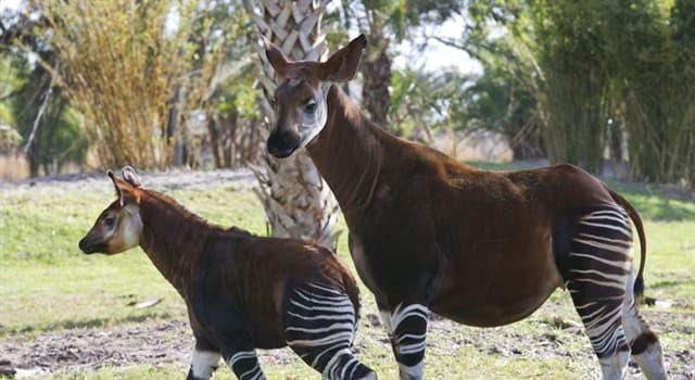 Naturaleza Pregunta Trivia: ¿Cómo se llama este animal?