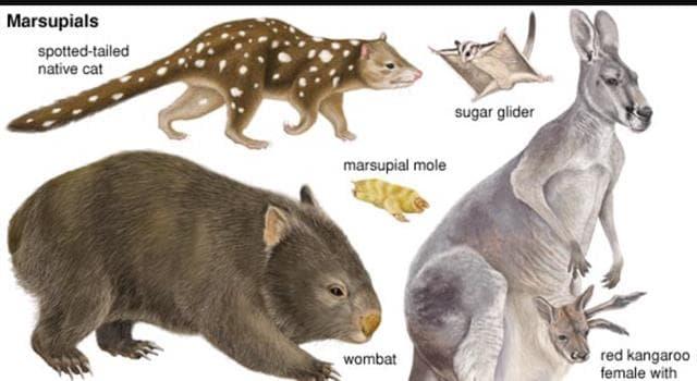 Naturaleza Pregunta Trivia: ¿Cuál es el único marsupial de Norteamérica?