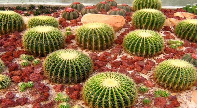 Naturaleza Pregunta Trivia: ¿Cuál es el nombre de planta que se muestra en la imagen?