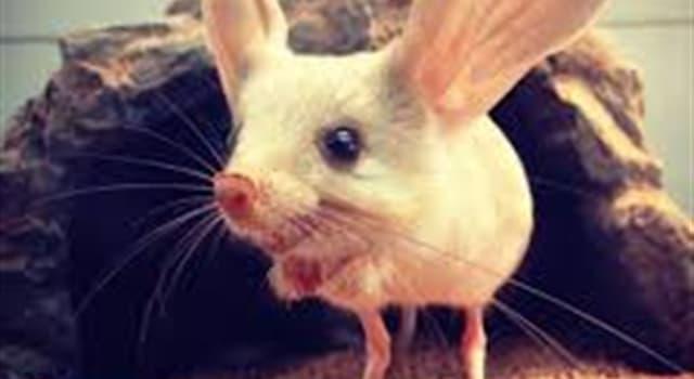 Naturaleza Pregunta Trivia: ¿Dónde habitan los jerbos de orejas largas?