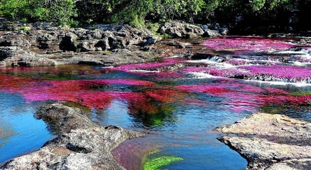 Geografía Pregunta Trivia: ¿Dónde se encuentra el río Caño Cristales?