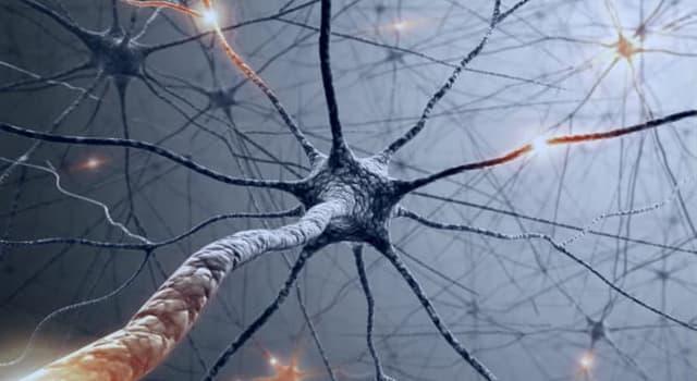 Сiencia Pregunta Trivia: ¿Las neuronas pueden reproducirse?