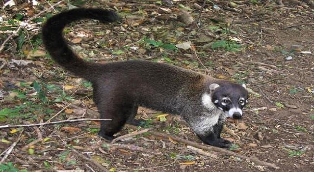 Naturaleza Pregunta Trivia: ¿Qué animal es el que se muestra en la imagen?