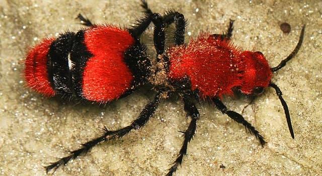 natura Pytanie-Ciekawostka: Do jakiej grupy owadów należy to zwierzę?