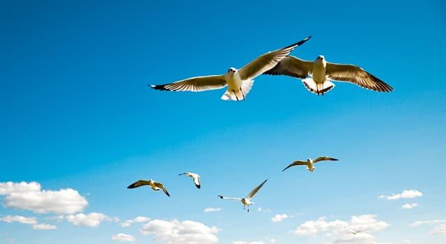 природа Запитання-цікавинка: Яка птах може літати спиною вперед?