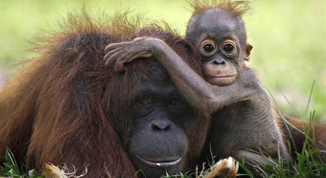 Natur Wissensfrage: Welches dieser Tiere hat die kürzeste Trächtigkeitsdauer?