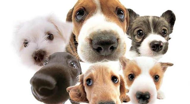 Natur Wissensfrage: Welche von diesen Tieren sind mit dem Hund nicht verwandt?