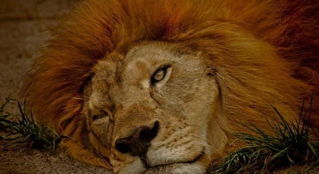 natura Pytanie-Ciekawostka: Które z tych zwierząt śpi z jednym otwartym okiem?