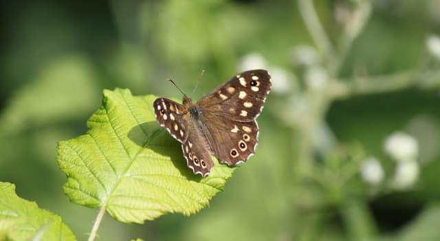 natura Pytanie-Ciekawostka: Który z tych owadów jest motylem, a nie ćmą?