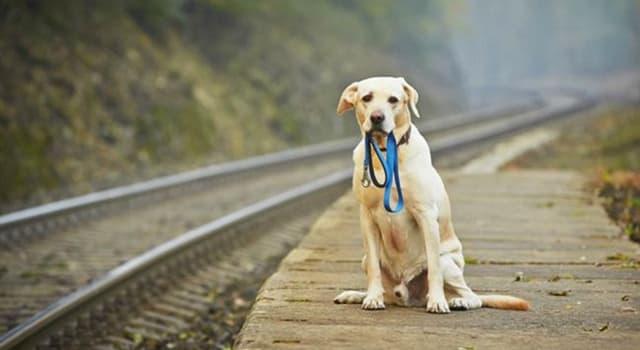 Naturaleza Pregunta Trivia: ¿Cómo logran los perros volver a casa luego de estar perdidos?
