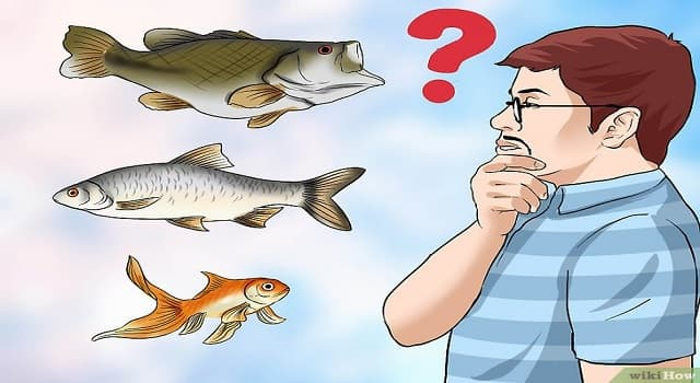 Naturaleza Pregunta Trivia: ¿Cuál es el nombre común de Oncorhynchus Nerka?