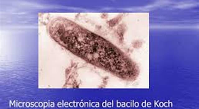 Сiencia Pregunta Trivia: ¿Cuál es el nombre de la enfermedad causada por el bacilo de Koch?