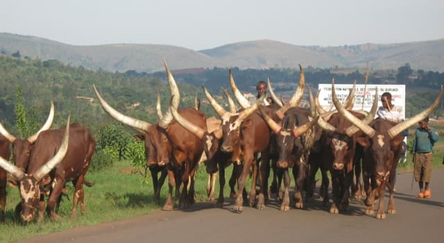 Geografía Pregunta Trivia: ¿Cuál es la capital de la República de Burundí?