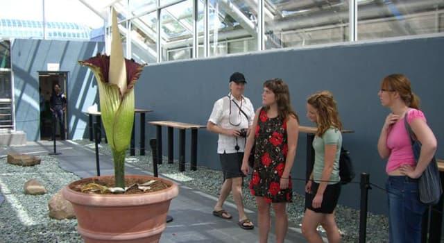 Naturaleza Pregunta Trivia: ¿Cuánto puede llegar a pesar la flor más grande del mundo?