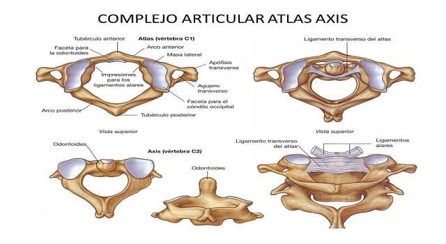 Сiencia Pregunta Trivia: ¿De qué región de la columna vertebral forman parte el atlas y el axis?