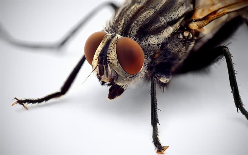 природа Запитання-цікавинка: Як називається найнебезпечніша муха?