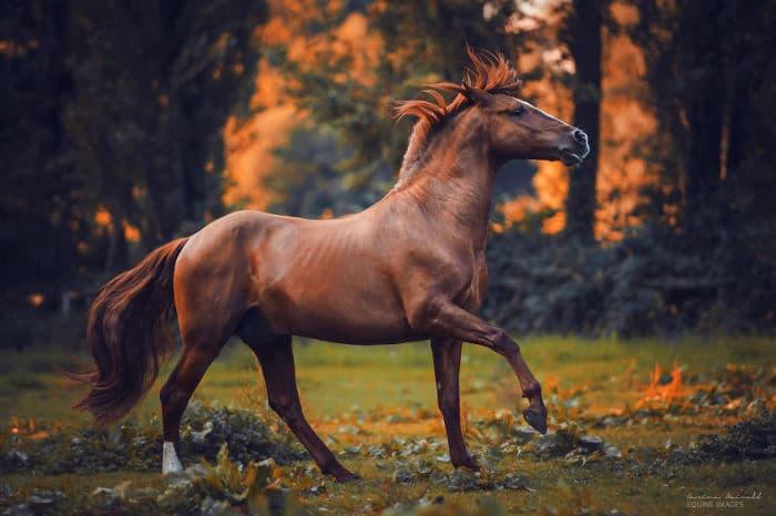 Культура Запитання-цікавинка: Хто їздив на коні на прізвисько Росинант?