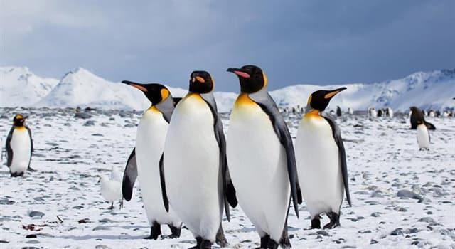 Geografía Pregunta Trivia: ¿Qué parte de nuestro planeta está cubierto de hielo completamente?