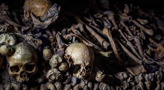 Сiencia Pregunta Trivia: ¿Qué es la antropología?