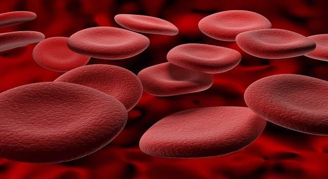 Сiencia Pregunta Trivia: ¿Qué es la hemocromatosis?