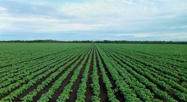 Sociedad Pregunta Trivia: ¿Qué país produce más soja en el mundo?