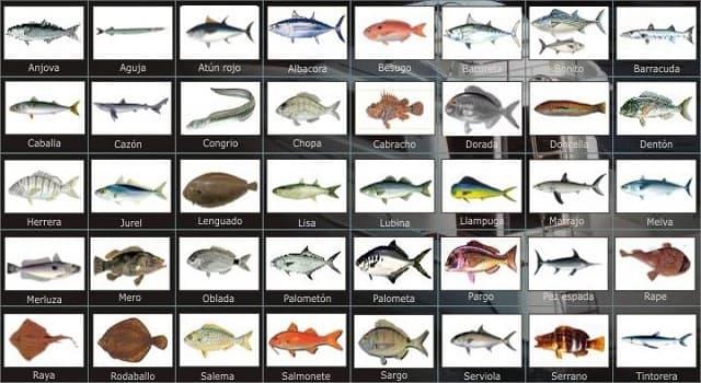 Naturaleza Pregunta Trivia: ¿Qué pez es llamado científicamente xiphias gladius?