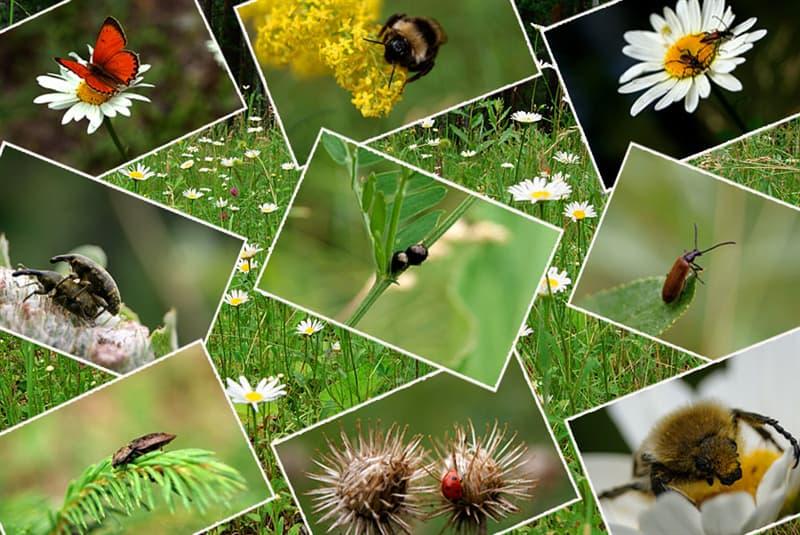 Natur Wissensfrage: Welches Insekt hat Gehörorgane an den Knien?