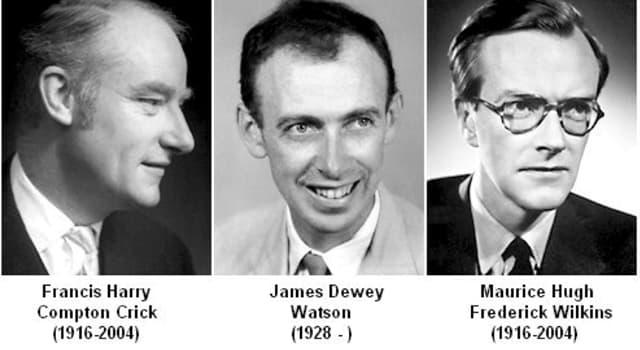 Wissenschaft Wissensfrage: Was haben James Watson, Francis Crick und Maurice Wilkins entdeckt?