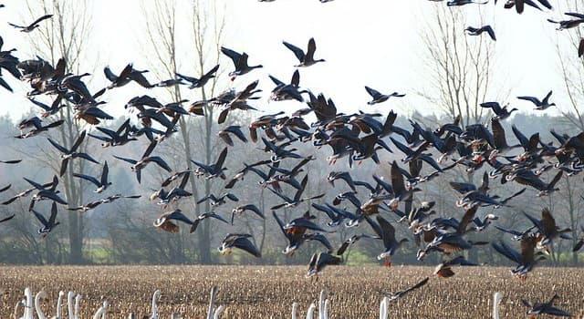 Kultur Wissensfrage: Was ist das verbreitetste Mittel gegen unerwünschte Vögel auf dem Feld?