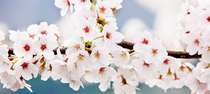 Культура Запитання-цікавинка: Що годує весняний день, згідно з відомим прислів'ям?