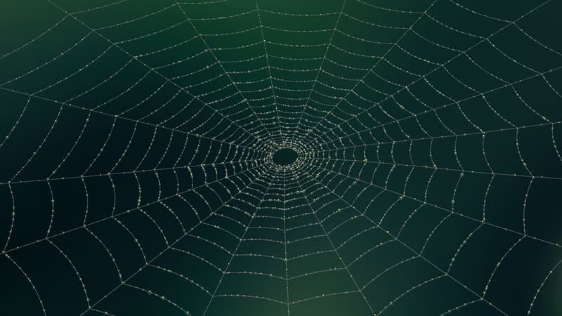 природа Запитання-цікавинка: Що трапиться з павуком, якщо він потрапить в павутину іншого павука?