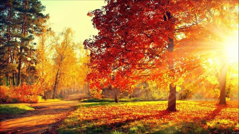 """Культура Запитання-цікавинка: Що таке """"Болдинська осінь""""?"""