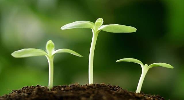 Geografía Pregunta Trivia: ¿Cómo se llama el fenómeno en que las plantas orientan el crecimiento de sus órganos en el sentido de la dirección de la gravedad, permaneciendo así?