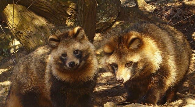 Naturaleza Pregunta Trivia: ¿ De dónde es originario el perro mapache?