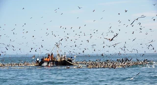 Naturaleza Pregunta Trivia: ¿Dónde se localizan las corrientes de Humboldt?