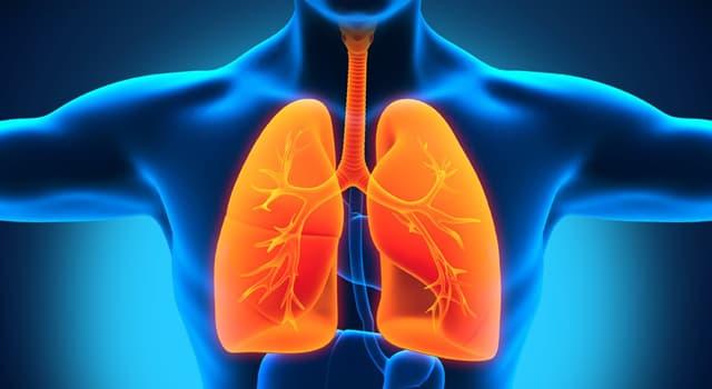Wissenschaft Wissensfrage: Welches Gas entfernen die menschlichen Lungen aus dem Blut?
